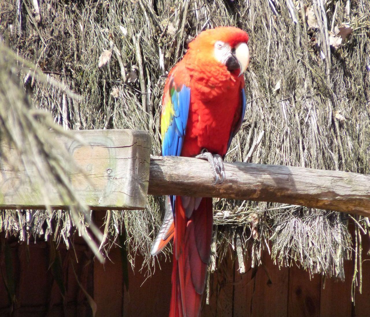 Zoo d 39 amn ville lorraine tourisme - Office de tourisme amneville ...