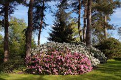 Les Jardins de Callunes